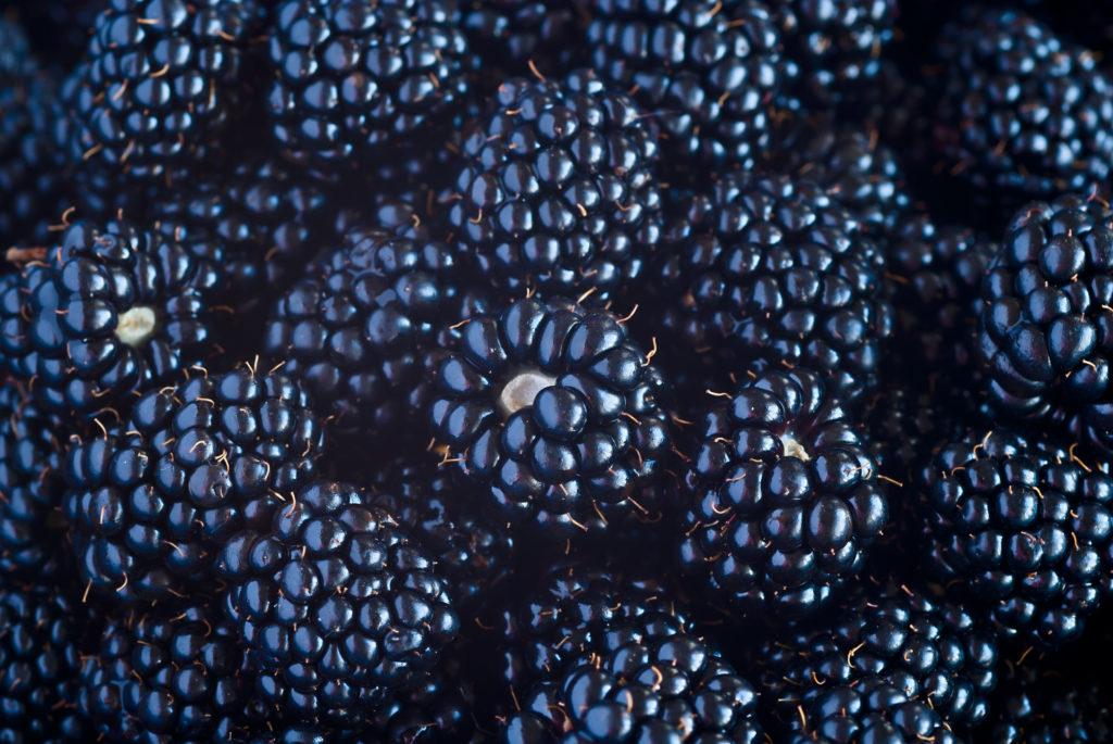 Fresh Blackberries view background